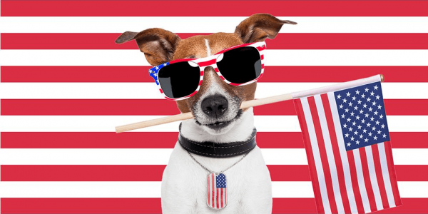 national-dog-day